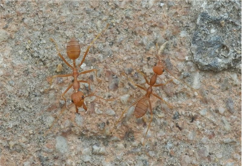 ...und Ameisen bei der Arbeit !!!!!
